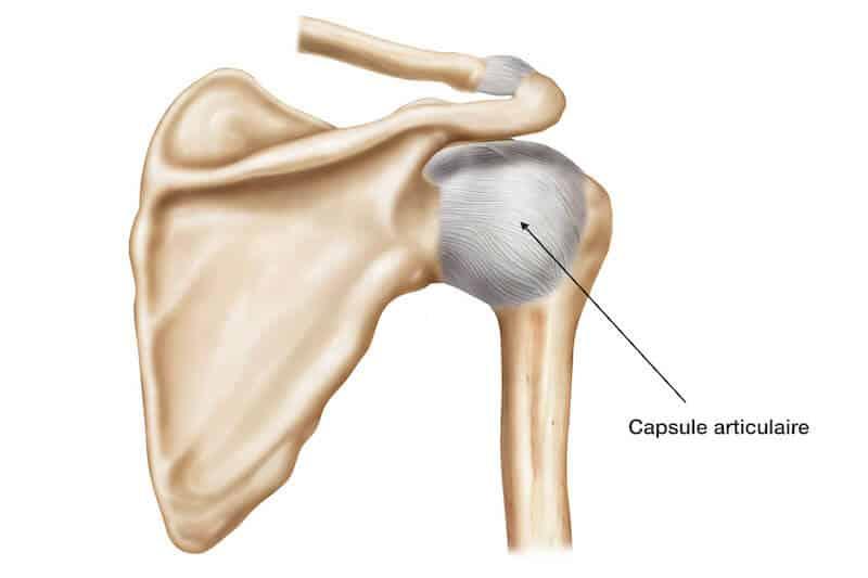 anatomie de l épaule - capsule articulaire épaule - capsule épaule