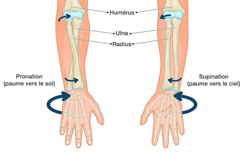 supination-main-supination-poignet-pronation-poignet-pronation-main-mouvement-pronosupination